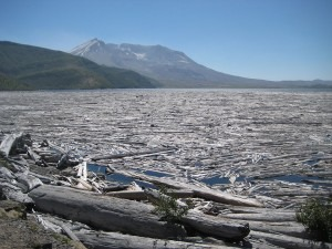 Spirit Lake, the abbreviated Mt. Saint Helens behind, filled with dead trees from the eruption (Stephan Schulz)