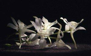 Flower Waltzes