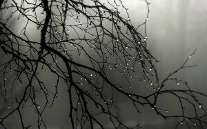 Rain drops on a tree