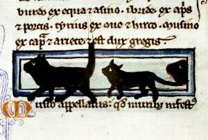 Cats in Procession