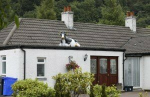 Not this cow on a roof