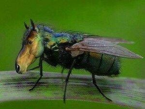 NOT a horsefly!