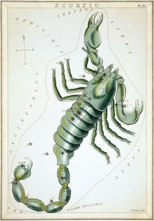 """""""Scorpio"""", plate 23 in Urania's Mirror, a set of celestial cards accompanied by A familiar treatise on astronomy ... by Jehoshaphat Aspin. London. Astronomical chart, 1 print on layered paper board : etching, hand-colored."""