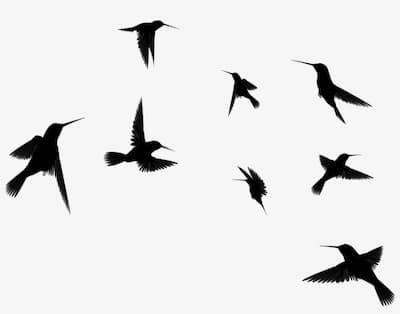 guess more classical music on birds