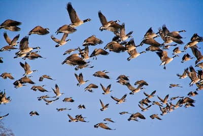 Quiz on Bird Music II – Who Composed These Bird Songs?