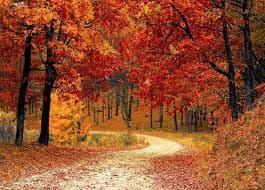 Vivaldi's Four Seasons - Autumn